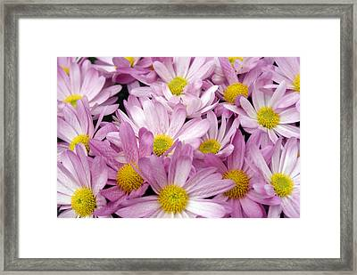 Pink White And Yellow Flowers Framed Print by Fabian Cardon