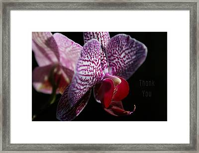 Pink White Orchids And A Reminder To Utter The Words Thank You. Framed Print