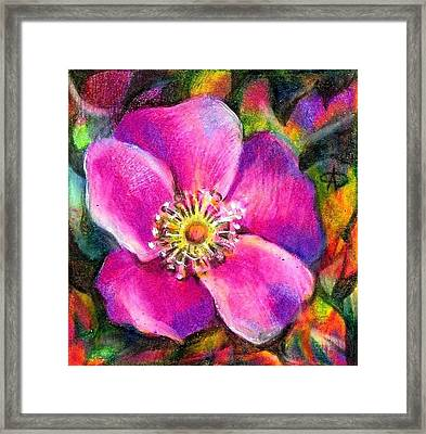 Pink Wild Flower. Alberta Flood Project Framed Print by Anna  Duyunova