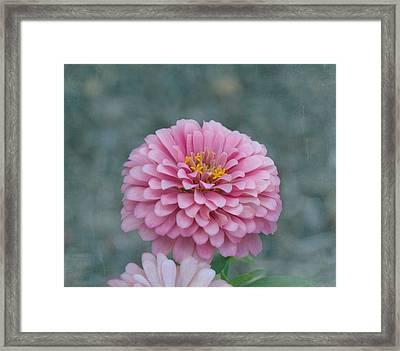 Pink Zinnia Flower Framed Print