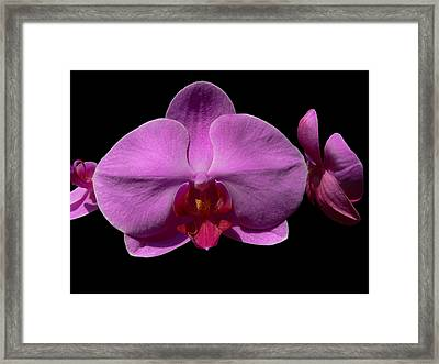 Pinkard Framed Print by Doug Norkum
