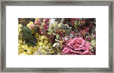 Pinkel Rose Framed Print
