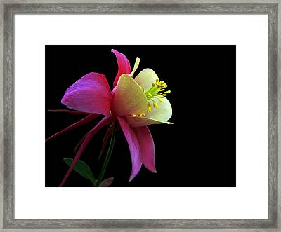 Pinkish Framed Print