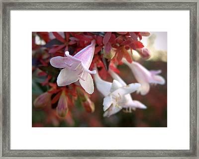 Pinks Framed Print by Joseph Skompski