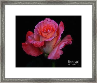 Pinky Framed Print by John  Kolenberg