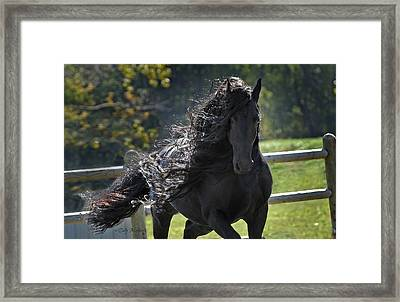 Pinnacle Of Friesians Framed Print