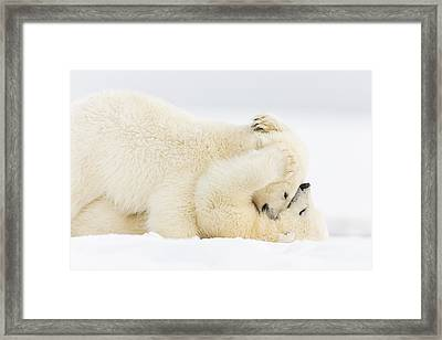 Pinned To The Snowy Mat Framed Print by Tim Grams