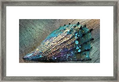 Pinnidae Aka Pen Shell Framed Print by Barbara Chichester