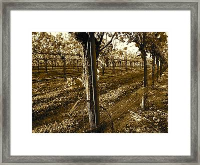 Framed Print featuring the photograph Pinot Growth by Paul Foutz
