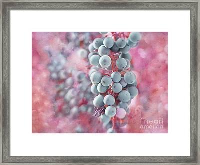 Pinot Noir Delight Framed Print by Irina Wardas