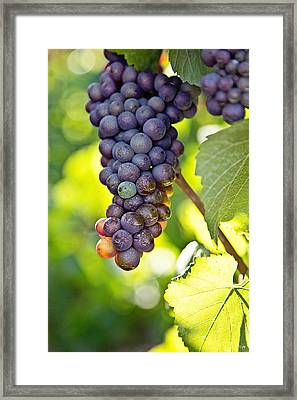 Pinot Noir Framed Print by Scott Pellegrin