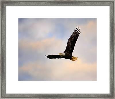 Pinson Mounds Eagle Framed Print