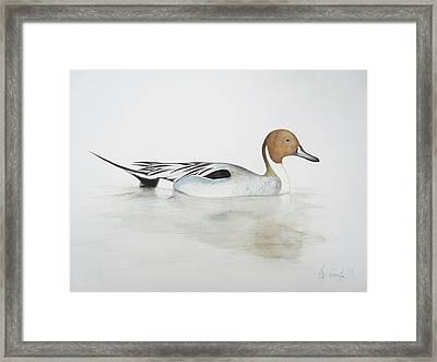 Pintail Duck Framed Print by Ele Grafton
