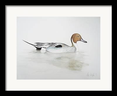 Duck Drawings Framed Prints