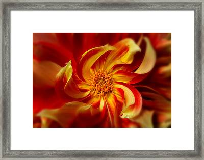 Pinwheel Framed Print by Mary Jo Allen