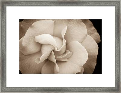 Pinwheel Rose Framed Print