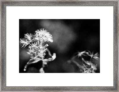 Pinwheels Framed Print by Barbara Shallue