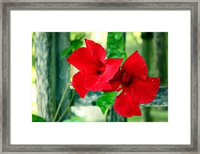 Pinwheels Framed Print by Greg Simmons