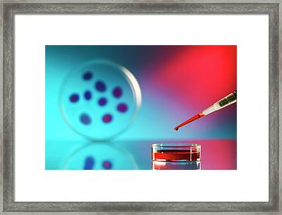 Pipette And Petri Dish Framed Print