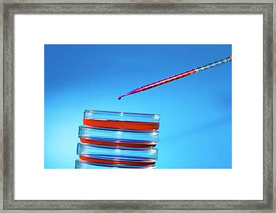 Pipette And Petri Dishes Framed Print