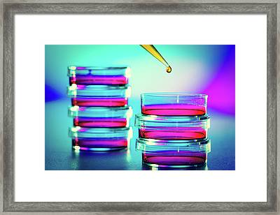 Pipette Dropping Liquid Into Petri Dish Framed Print