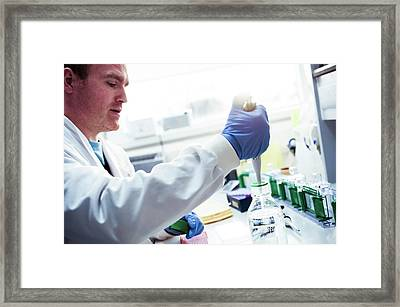 Pipetting Liquid From A Bottle Framed Print by Dan Dunkley