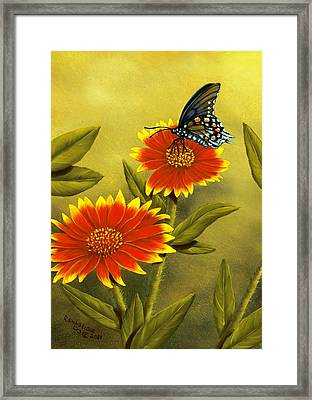 Pipevine Swallowtail And Blanket Flower Framed Print by Rick Bainbridge