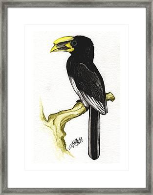 Piping Hornbill Framed Print by Justin F C Miller