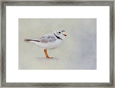 Piping Plover Framed Print by Bill Wakeley