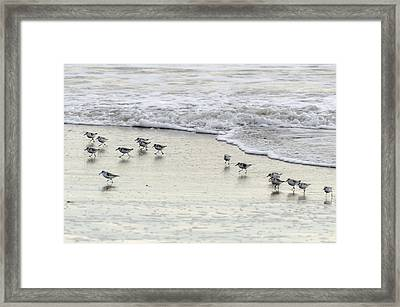 Piping Plovers At Water's Edge Framed Print