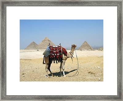 Piramides Y Kamel Framed Print