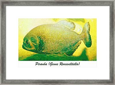 Piranha Fish Digital Art Framed Print by A Gurmankin