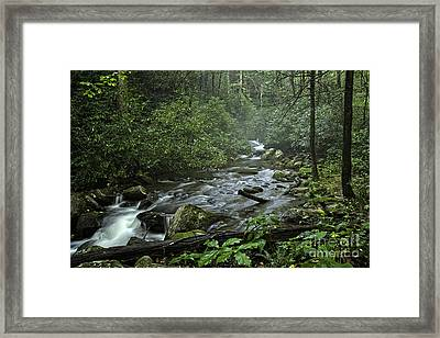 Pisgah Forest  Framed Print