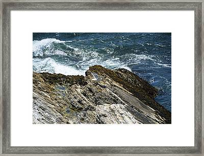 Pismo Beach Seagull On The Wing Framed Print