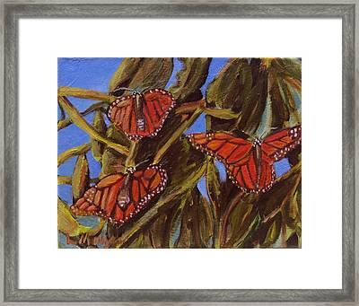 Pismo Monarchs Framed Print