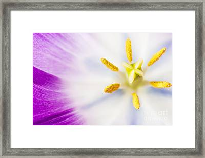 Pistil And Stamen Framed Print by Charlotte Lake