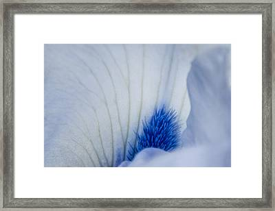 Pistil Pastels Framed Print