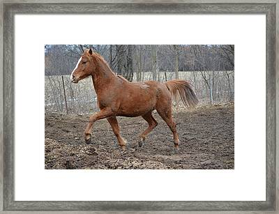 Pistol1 Framed Print by Jennifer  King