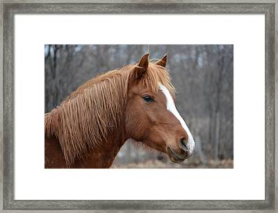 Pistol2 Framed Print by Jennifer  King