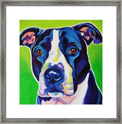 Pit Bull - Sadie Framed Print