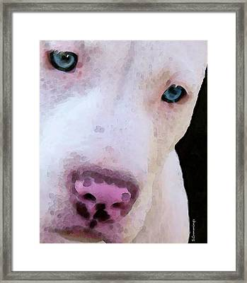 Pit Bull Art - Not A Fighter Framed Print