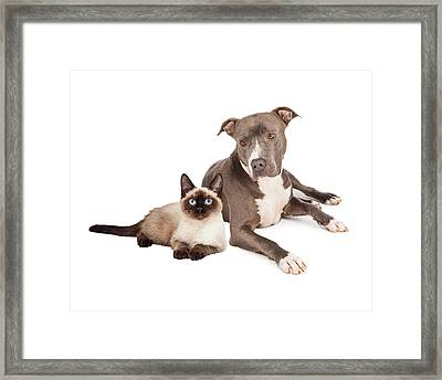 Pit Bull Dog And Siamese Cat Framed Print by Susan Schmitz