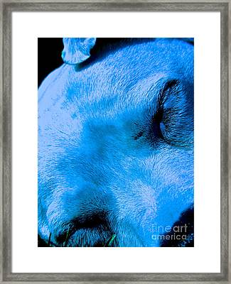 Pit Bull Lullaby// Dream Until Your Dreams Come True Framed Print by Q's House of Art ArtandFinePhotography