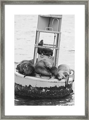 Pit Stop Black And White Framed Print