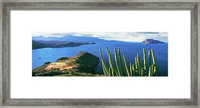 Pitaya Cactus, Punta El Puertecito Framed Print by Panoramic Images