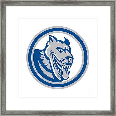 Pitbull Dog Mongrel Head Circle Framed Print by Aloysius Patrimonio