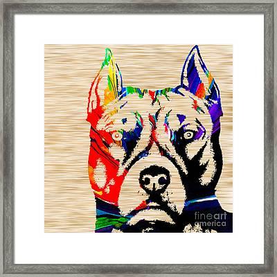 Pitbull Love Framed Print by Marvin Blaine