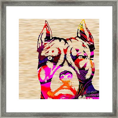 Pitbull Power Framed Print