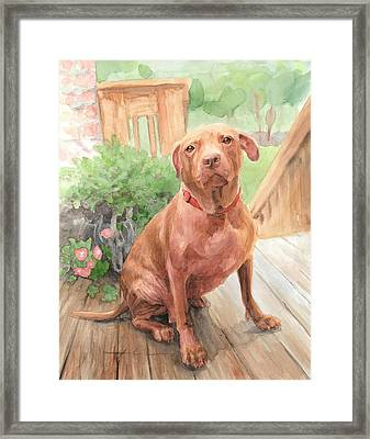 Pitbull Watercolor Portrait Framed Print by Mike Theuer