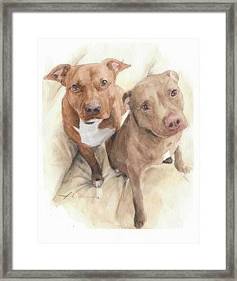 Pitbulls Watercolor Portrait Framed Print by Mike Theuer